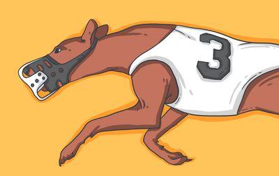 Ставки на собачьи бега: особенности, стратегии, типы пари